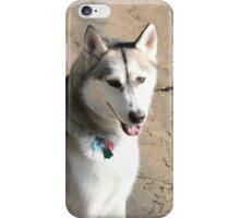 Husky Sibérien  iPhone Case/Skin