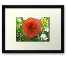 A touch of persimmon Framed Print