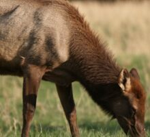 Young Elk Sticker