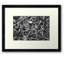 Survival is beautiful Framed Print