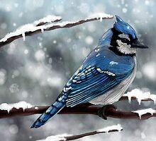 Blue Jay by Ben Geiger