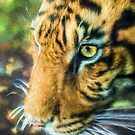 Eye Of The Tiger (TS) by Ray Warren