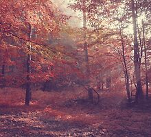 Dawn in the forest vintage landscape by juras