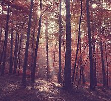 Vintage forest landscape with sunrays in the morning by juras