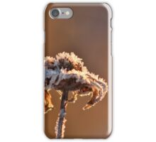 A Winter Frost iPhone Case/Skin