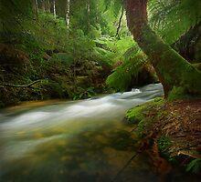 Junee River, Tasmania by Kevin McGennan