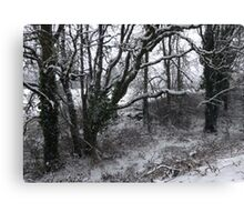 Into the Snowy Woods Canvas Print