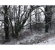 Into the Snowy Woods Photographic Print