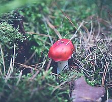 red mushroom in the forest by pASob-dESIGN