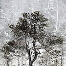 12.1.2016: Pine Tree in Blizzard II by Petri Volanen