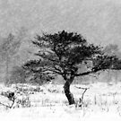 12.1.2016: Pine Tree in Blizzard IV by Petri Volanen