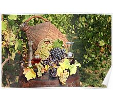 vineyard with grape and wine  Poster