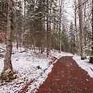 Bavarian Alps Path - 3/4 by Luka Skracic