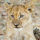 lion cub 2 by BlaizerB