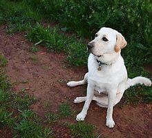 Labrador Dog by BlaizerB