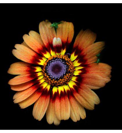 Tiedye Sunflower Sticker
