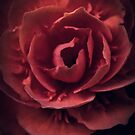 Afternoon Tea (Flower) by alan shapiro