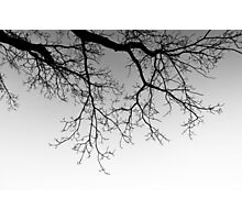 Tree Silhouette #1 Photographic Print