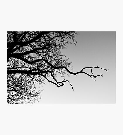Tree Silhouette #3 Photographic Print