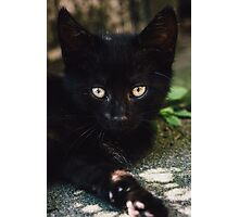 Black Kitten Lying Down Closeup Photographic Print