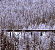 Glacier National Park 3 by photocracy