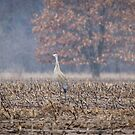 A Pair Of Sandhill Cranes 2014-3 by Thomas Young
