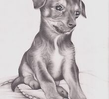 Chorkie puppy drawing by Pam Humbargar