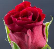 Red Rose - I Love You Sticker