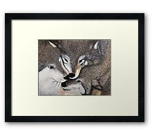 Wolf Pack Framed Print