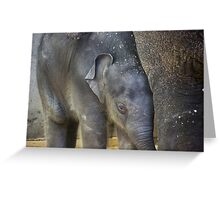 Stay Close Greeting Card