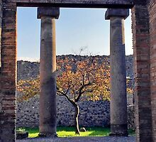 Little Tree Alive in Pompeii by Ginette Jalbert