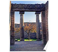 Little Tree Alive in Pompeii Poster