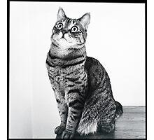 Tasha in black and white Photographic Print