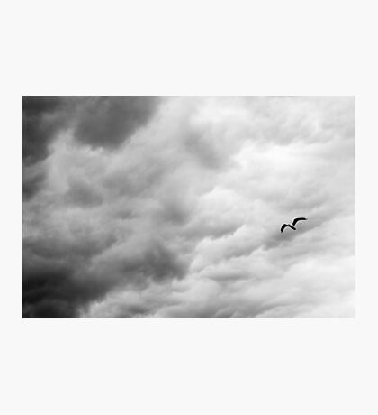A Bird Flew Through the Sky Thinking of Life Photographic Print