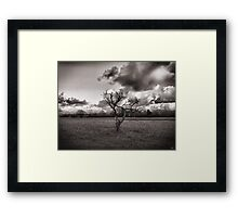 Melancholy tree  Framed Print