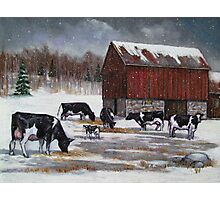 Cows in Snowy Barnyard No. 2, Oil Pastel Painting Photographic Print
