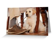 Naughty puppy Greeting Card