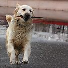 Fetch! by Alex Boros