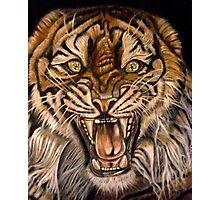 Brawler-Tiger With Issues Photographic Print
