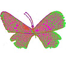 Cupid's butterfly Photographic Print