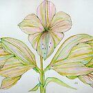 Amaryllis by Gea Jones