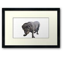 Neapolitan Mastiff 2 Framed Print