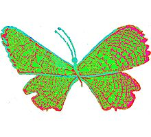 jingle butterfly Photographic Print