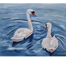 Simply Swans Original Oil Painting Photographic Print