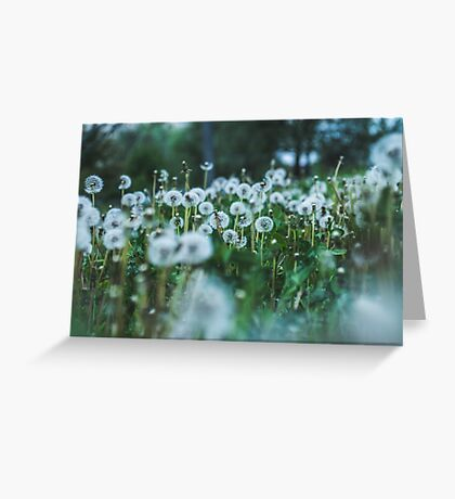 dusky dandelions Greeting Card