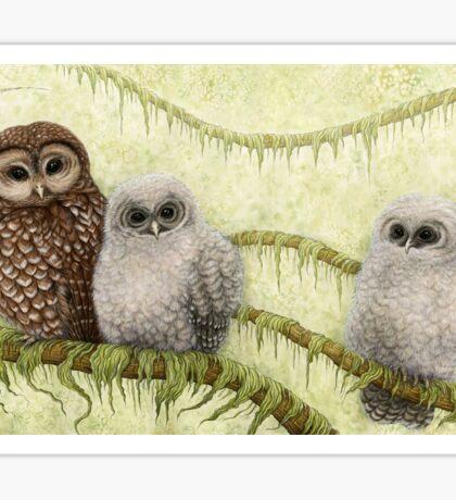 Northern Spotted Owls (Strix occidentalis caurina) Sticker