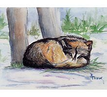 Wolf At Rest Photographic Print