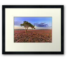 Lone Tree on Egton Moor Framed Print