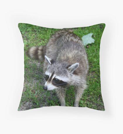 Raton laveur Throw Pillow