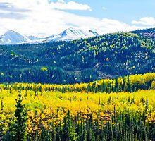 Denali - Golden Valley by Mary Carol Story
